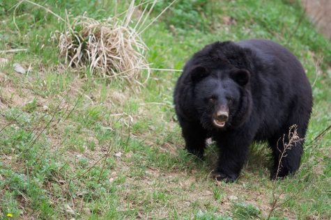 Colorado Local Slaughtered by Bear